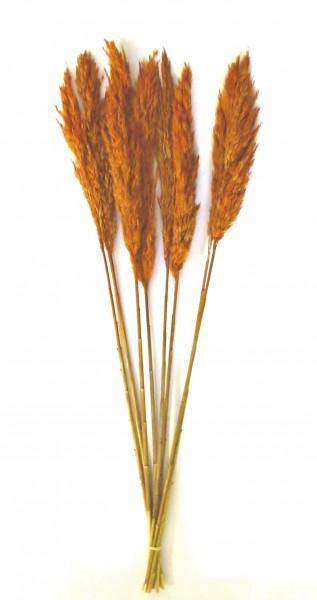 Trockenblume Rostfarben Bund Deko Natur 78 cm